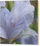 Office Art Blue Iris Flower Floral Giclee Baslee Troutman Wood Print