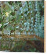 Office Art Fern Green Forest Ferns Giclee Prints Baslee Troutman Wood Print