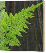 Office Art Ferns Art Redwood Tree Forest Fern Giclee Prints Baslee Troutman Wood Print