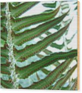 Office Art Ferns Green Forest Fern Giclee Prints Baslee Troutman Wood Print