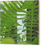 Office Art Ferns Redwood Forest Fern Giclee Prints Baslee Troutman Wood Print