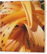 Office Art Floral Artwork Orange Tiger Lily Baslee Troutman Wood Print