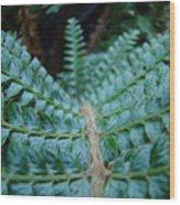 Office Art Forest Ferns Green Fern Giclee Prints Baslee Troutman Wood Print