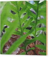 Office Art Forest Ferns Green Fern Giclee Prints Baslee Troutman Wood Print