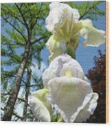 Office Art Giclee Prints White Yellow Iris Flowers Irises Baslee Troutman Wood Print
