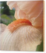 Office Art Irises Orange Iris Flowers 9 Giclee Prints Corporate Art Baslee Troutman Wood Print