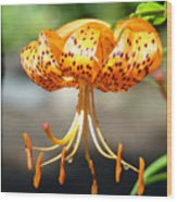 Office Art Master Garden Lily Flower Art Print Tiger Lily Baslee Troutman Wood Print