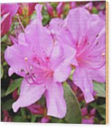 Office Art Pink Azalea Flower Garden 3 Giclee Art Prints Baslee Troutman Wood Print