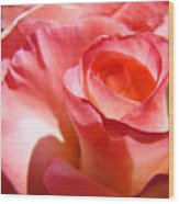 Office Art Pink Rose Spiral Roses Giclee Prints Baslee Troutman Wood Print