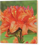 Office Art Prints Azaleas Botanical Landscape 11 Giclee Prints Baslee Troutman Wood Print