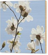 Office Art Prints Blue Sky White Magnolia Flowers 38 Giclee Prints Baslee Troutman Wood Print