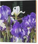 Office Art Prints Iris Flower Botanical Landscape 30 Giclee Prints Baslee Troutman Wood Print
