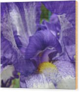 Office Art Prints Iris Flowers Purple White Irises 40 Giclee Prints Baslee Troutman Wood Print
