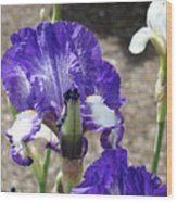 Office Art Prints Irises Flowers 46 Iris Flower Giclee Prints Baslee Troutman Wood Print