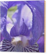 Office Art Prints Irises Purple Iris Flower Giclee Baslee Troutman Wood Print