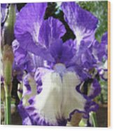 Office Art Prints Irises Purple White Iris Flowers 39 Giclee Prints Baslee Troutman Wood Print