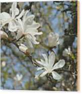 Office Art Prints Magnolia Tree Flowers Landscape 15 Giclee Prints Baslee Troutman Wood Print