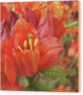 Office Art Prints Orange Azalea Flowers 20 Giclee Prints Baslee Troutman Wood Print