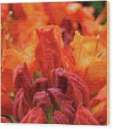 Office Art Prints Orange Azaleas Flowers 9 Giclee Prints Baslee Troutman Wood Print