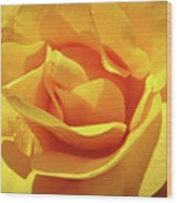 Office Art Prints Roses Orange Yellow Rose Flower 1 Giclee Prints Baslee Troutman Wood Print