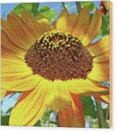 Office Art Prints Sunflowers Giclee Prints Sun Flower Baslee Troutman Wood Print