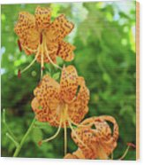 Office Art Prints Tiger Lilies Flowers Nature Giclee Prints Baslee Troutman Wood Print