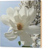 Office Art Prints White Magnolia Flower 66 Blue Sky Giclee Prints Baslee Troutman Wood Print