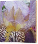 Office Art Purple Iris Flower Floral Irises Giclee Baslee Troutman Wood Print