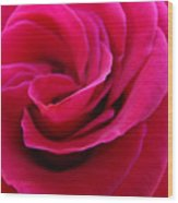 Office Art Rose Spiral Art Pink Roses Flowers Giclee Prints Baslee Troutman Wood Print