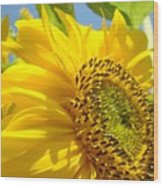 Office Art Sunflowers Giclee Art Prints Sun Flowers Baslee Troutman Wood Print