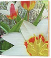 Office Art Tulips Tulip Flowers Giclee Art Prints Florals Baslee Troutman Wood Print