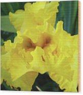 Office Art Yellow Iris Flower Irises Giclee Prints Baslee Troutman Wood Print
