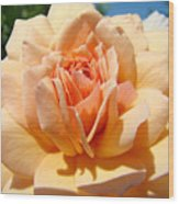 Office Artwork Roses Peach Rose Flower Giclee Baslee Troutman Wood Print