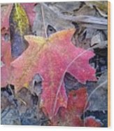 Autumn Color Wood Print