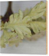 Oh So Small Oak Leaves Wood Print
