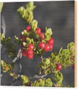 Ohelo Berries Wood Print