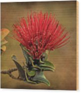 Ohia Lehua Flower Volcanos National Park Wood Print
