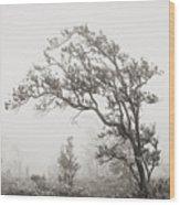 Ohia Lehua Tree Wood Print