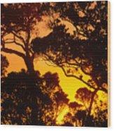 Ohia Trees At Sunset Wood Print
