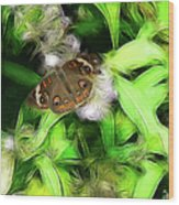 Ohio Buckeye Wood Print