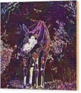 Okapi Okapia Mondonga Mammals  Wood Print
