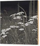 Oklahoma Prairie Flowers Wood Print