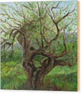 Old Apple Tree Wood Print