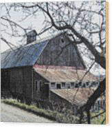 Old Barn With Tree Watercolor Wood Print