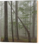 Old Beech Forest Wood Print