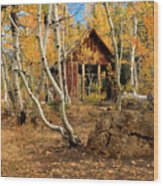 Old Cabin In The Aspens Wood Print