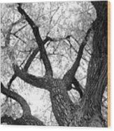 Old Cottonwood Tree Wood Print