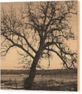 Old Crooked Tree Overlooking Mississippi River Wood Print