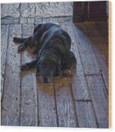 Old Dog Old Floor Wood Print