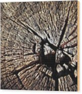 Old Dry Stump Wood Print